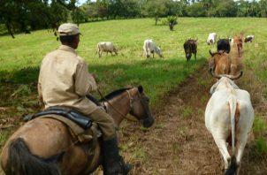 Productores solicitaron al Mida MIDA que se gestione la exportación de ganado vivo de hasta 10 mil cabezas.