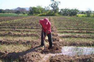 El sector agropecuario ha reducido de forma sostenida su participación en el producto interno bruto en los últimos 40 años. Foto: Archivo