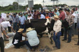 Los productores de la región de Azuero exigen respeto y que se cumplan las promesas. Foto/Thays Domínguez