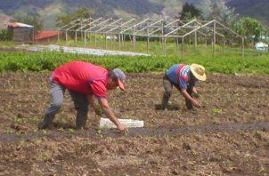 Los productores aseguran que debido a la falta de pagos a tiempo de las compensaciones muchos han abandonado la actividad. Archivo