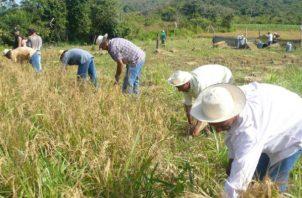 Laurentino Cortizo explicó que con este dinero se busca reactivar el sector agropecuario del país y a su vez que los productores puedan saldar sus cuentas con otros acreedores.
