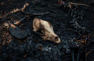 Campesinos en Amazonia hacen quemas para desmontar tierras. Algunos dicen que aceleran el cambio climático. (Victor Moriyama para The New York Times)
