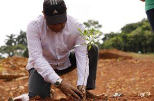 Constantemente se realizan jornadas de reforestación. Foto de cortesía