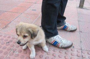 Temor en Tocumen por ataques de una banda de roba mascotas. Foto: Panamá América.