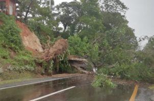 Miles de conductores han quedado atrapados en la vía debido a la caída de un enorme árbol en la Ermita de San Carlos. Foto/Cortesía