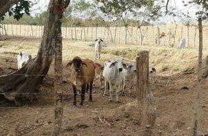 Buscan aunar esfuerzos y recursos ante la amenaza de una fuerte sequía para el próximo verano