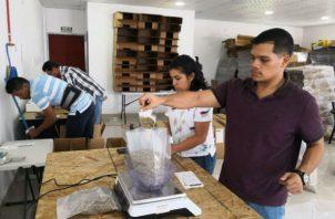 Los lotes recibidos  son  pesados y empacados al vacío en bolsas de 50 libras. Foto: José Vásquez.