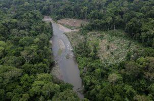 La mayor parte de los árboles que se derriban en Darién se hace sin permiso alguno.