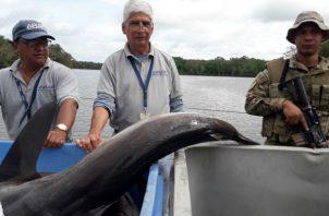 Se les decomisaron más de 6,000 libras de pescado, entre ellos 232 tiburones. Foto: Mayra Madrid.