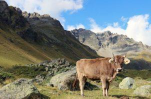 Una encuesta a 250 expertos arqueológicos dio una visión más amplia sobre el uso de la tierra. Los Alpes Italianos. Foto/ Andrea Kay.