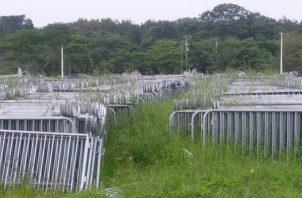 Las vallas metálicas estaban en medio de la maleza en Metro Park, lugar donde bajó el telón de la JMJ en Panamá el 27 de enero de 2019.