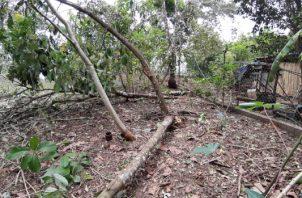 Los fuertes vientos en el área provocaron la caída de gran cantidad de árboles. Foto/Melquiades Vásquez