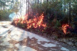 Hace unos días atrás se afectaron unas 30 hectáreas con un incendio forestal en la reserva forestal de La Yeguada. Foto/Melquiades Vásquez