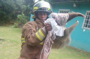 El bombero logró sacar al animal del árbol. Foto/José Vásquez