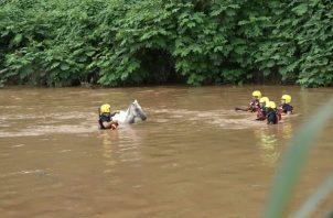 El caballo se quedó atascado en el río La Villa. Foto/Thay Domínguez