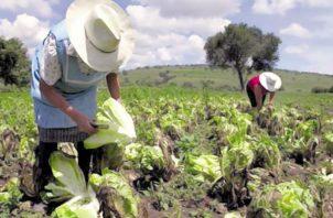 La agricultura controlada es la única solución para combatir los efectos de la sequía.