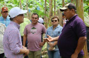 El consumo per cápita de plátano en Panamá es de 35 kilogramos.