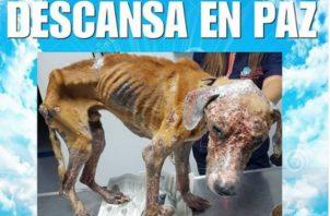 Muerte de Athens alerta a las autoridades sobre crueldad animal. Foto/Redes