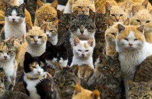 Hay evidencia de que gatos consideran a sus amos más que simples sirvientes. Foto/ Thomas Peter/Reuters.