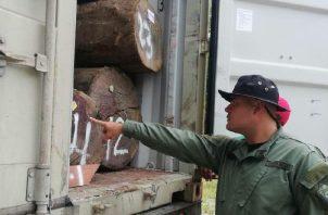 La tala de cocobolo es una de las principales preocupaciones de las autoridades. Foto de cortesía