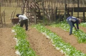 En los últimos años la sequía ha generado millones de dólares en pérdidas a los productores. Archivo