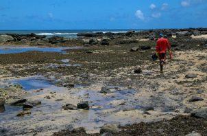 Las manchas de petróleo han llegado a 283 playas de 98 municipios.