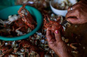 Una persona abre un cangrejo en Recife (Brasil), capital del estado brasileño de Pernambuco, uno de los más afectados por el derrame de petróleo en el Atlántico. FOTO/EFE