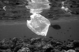 A pesar del despliegue de bolsas de todos los colores,  tamaños, precios con propaganda, sin propaganda, los peces siguen muriendo porque siguen tirando plásticos al mar. Foto: Archivo.