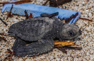 Especies marinas afectadas. Foto: Cortesía