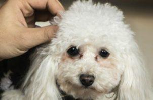 En manos de todos está darles amor a los perritos y otros animales. Pixabay