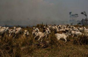 Vigilar el bosque tropical ya no es tanta prioridad bajo el presidente Jair Bolsonaro. En Rondônia, un rancho se extendió a la Amazonia. Foto/ Victor Moriyama para The New York Times.