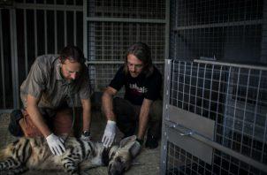 Ian Sayers, veterinario, y Jason Mier, de Animals Lebanon, examinan una hiena rayada en un zoológico privado. Foto/ Diego Ibarra Sanchez.