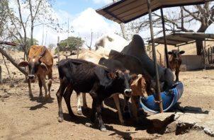 Los ganaderos solicitan, además, que se realicen acuerdos que permitan ampliar los mercados para exportar unas 30 mil reses, tanto a China como a otros países. Foto/Thays Domínguez