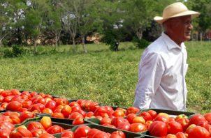En la actividad agropecuaria participan unos 75 tomateros de la región. Foto: Thays Domínguez.