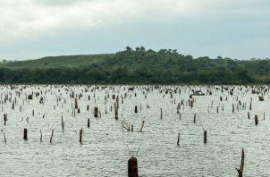 Gatún y Alhajuela son lagos artificiales que almacenan el agua de las lluvias que caen en la Cuenca Hidrográfica.