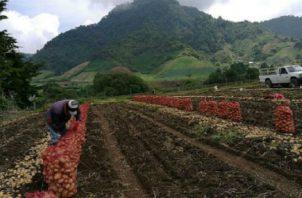 Importaciones en época de cosecha han afectado al sector agro. Foto: Archivo.
