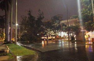 Un enorme árbol cayó en el Parque Sucre,afectando a varios vehículos. Foto/Dipomedes Sánchez