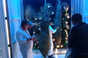 Al país han llegado  hasta el pasado 3 de diciembre unos 86 contenedores con arbolitos de Navidad.