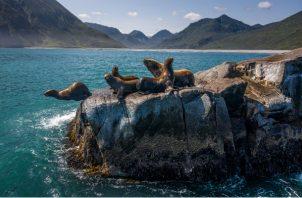 La Península de Kamchatka es hogar de diversidad de animales, que incluyen leones marinos, osos y orcas. Foto/ Sergey Ponomarev.