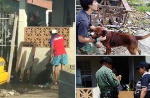 Los casos de maltrato animal van en aumento. ARCHIVO