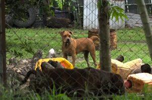 Al momento del ataque de los perros, el dueño no estaba en la casa. Foto: José Vasquez.