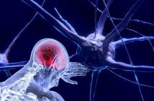 Al hablar de neurociencia se debe pensar más en el sistema nervioso.  Pixabay