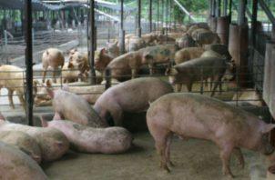 Hasta el año 2017, el sector porcino crecía a un ritmo de 10% anual. Foto: Archivo.