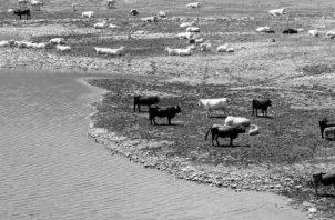 Un reservorio de agua afectado por la sequía. El agua es vital para la salud de los animales. Un animal sano es un animal productivo, y un animal productivo es un elemento financiera y ecológicamente eficiente. Foto: EFE.