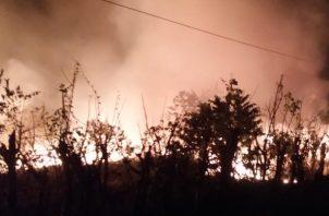 En el 2019 se perdieron en Panamá 74,890.04 hectáreas, producto de los incendios de masa vegetal.