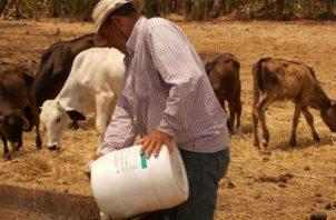 El Ministerio de Desarrollo Agropecuario (Mida) ha construido unos 500 abrevaderos para cosechar agua.