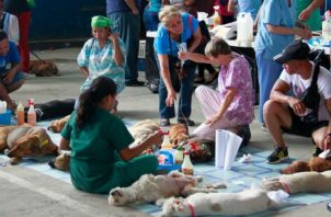 A través del Programa Municipal de Bienestar Animal se ejecutarán campañas masivas de esterilización a nivel nacional. ARCHIVO