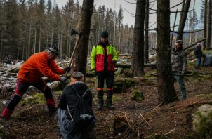 Bosques son fuente de inspiración en Alemania y la gente lucha por salvarlos. Olaf Eggert (centro), guardabosques, con voluntarios en siembra de árboles en Schierke. Foto/ Lena Mucha para The New York Times.