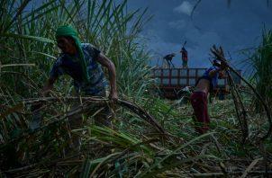 Millones de trabajadores de plantación viven en condiciones casi feudales. Cortan caña de azúcar en Kabankalán. Foto / Jes Aznar para The New York Times.