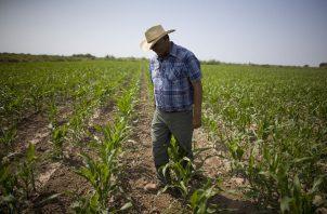 Los productores aseguran que en este momento viven en una crisis por los bajos precios. Foto/Archivo